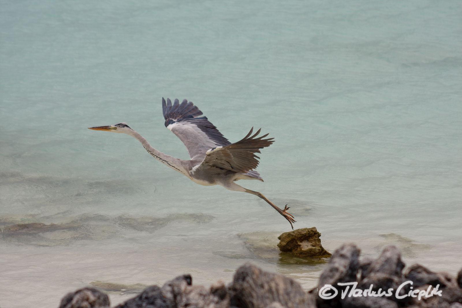 20080527_100643_Malediven_3299.jpg